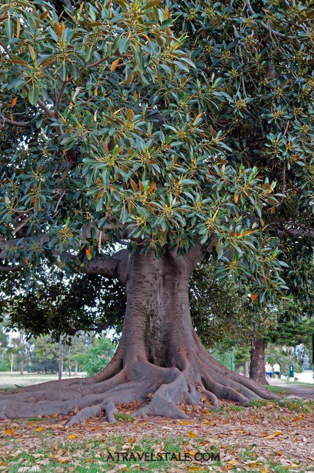 albert park albero