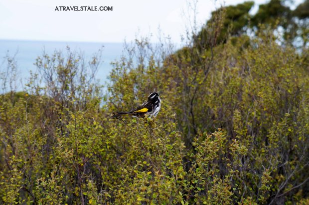 uccellino torquay